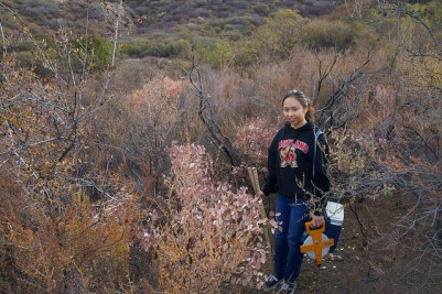 dead chaparral shrubs following the 2014 drought in CA