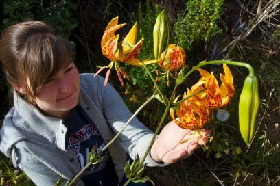 Humbolt lily on Santa Cruz Island, CA
