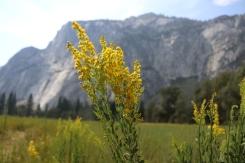 Yosemite, Aug 2016