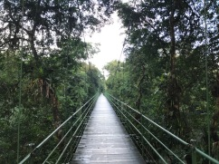 bridge at La Selva Biological Research Station, Costa Rica