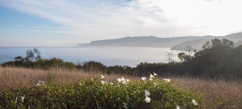 Santa Cruz Island, January2018